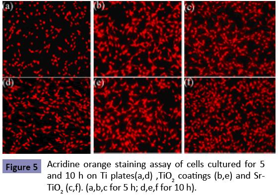 orthopedics-Acridine-orange-staining