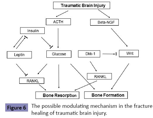 orthopedics-possible-modulating-mechanism